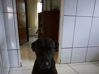 Vários cães abandonados foram envenenados em Serra do Salitre | Patos Agora - A notícia no seu tempo - http://www.patosagora.net