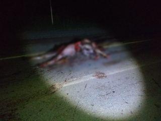 Ambulância de Presidente Olegário atropela e mata cavalo na BR-354  | Patos Agora - A notícia no seu tempo - http://www.patosagora.net