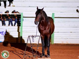 Final do Rodeio da Cavalgada Vila Vicentina - Parte 2 | Patos Agora - A notícia no seu tempo - http://patosagora.net