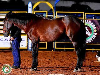 Final do Rodeio da Cavalgada Vila Vicentina - Parte 2 | Patos Agora - A notícia no seu tempo - http://www.patosagora.net
