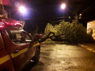 Vendaval em Patos de Minas derruba árvores e provoca danos na rede telefônica | Patos Agora - A notícia no seu tempo - https://patosagora.net