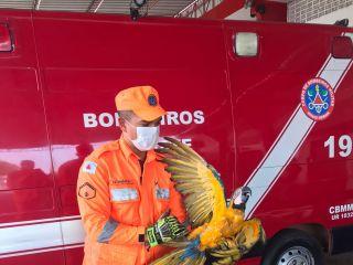 Bombeiros capturam três animais silvestres feridos no perímetro urbano de Patos de Minas   Patos Agora - A notícia no seu tempo - https://patosagora.net