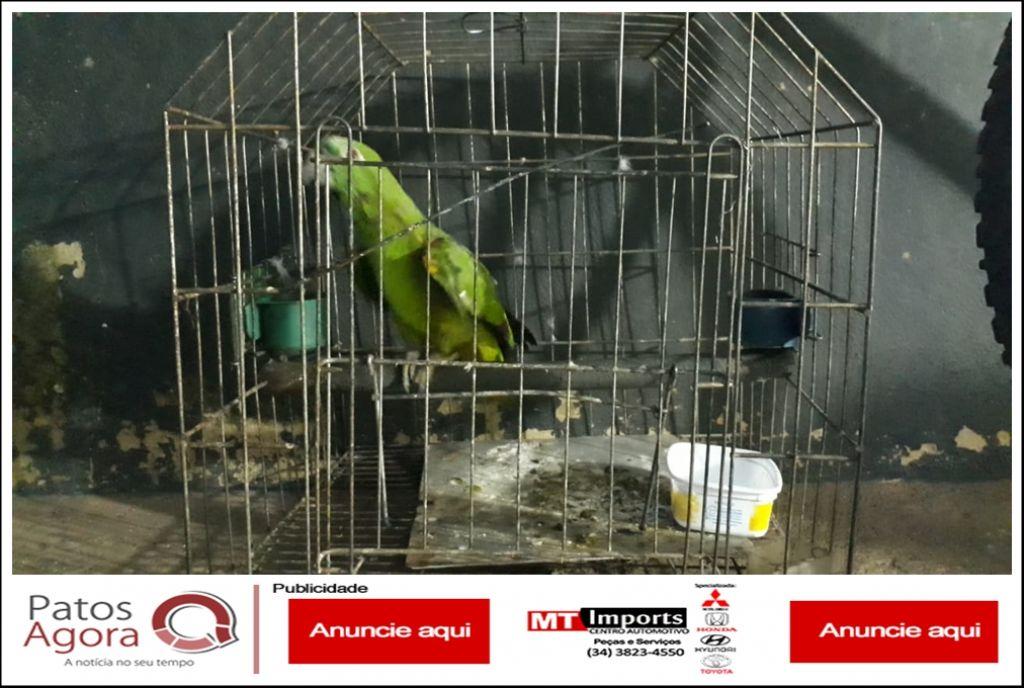Idosa é detida e multada em mais de 2 mil reais por manter em cativeiro ave da fauna silvestre