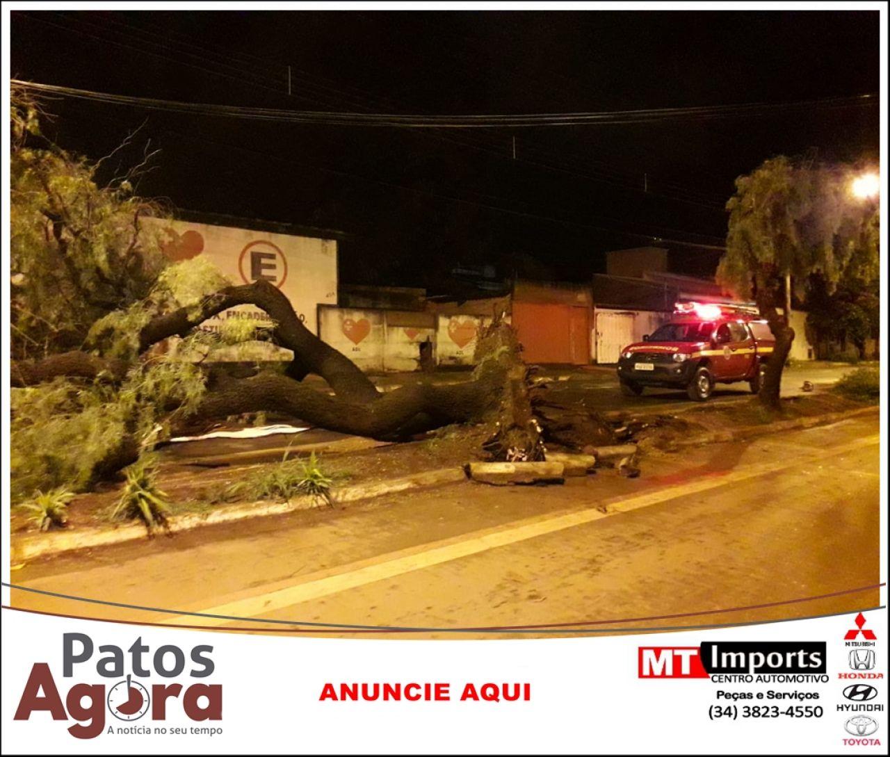 Vendaval em Patos de Minas derruba árvores e provoca danos na rede telefônica