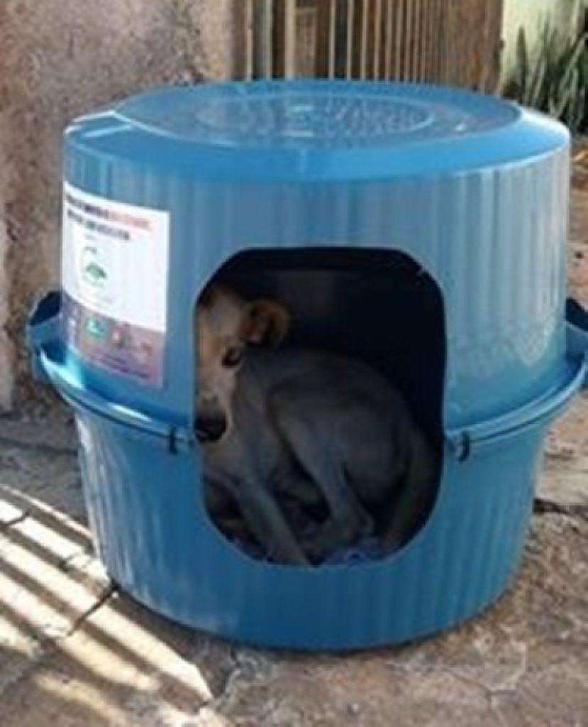 Associação e empresas de São Gotardo criam solução inteligente para proteger animais abandonados na época de frio