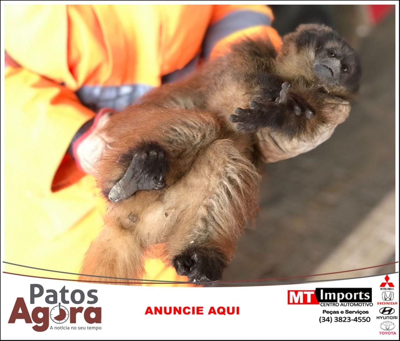 Bombeiros capturam três animais silvestres feridos no perímetro urbano de Patos de Minas