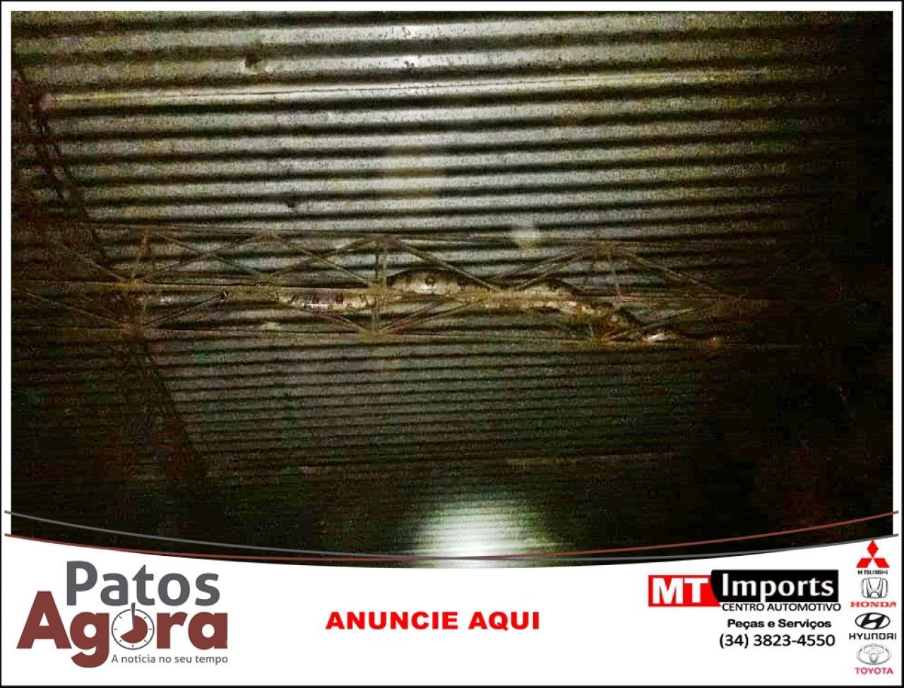 Bombeiros de Patos de Minas capturam mais uma serpente de grande porte na área urbana da cidade