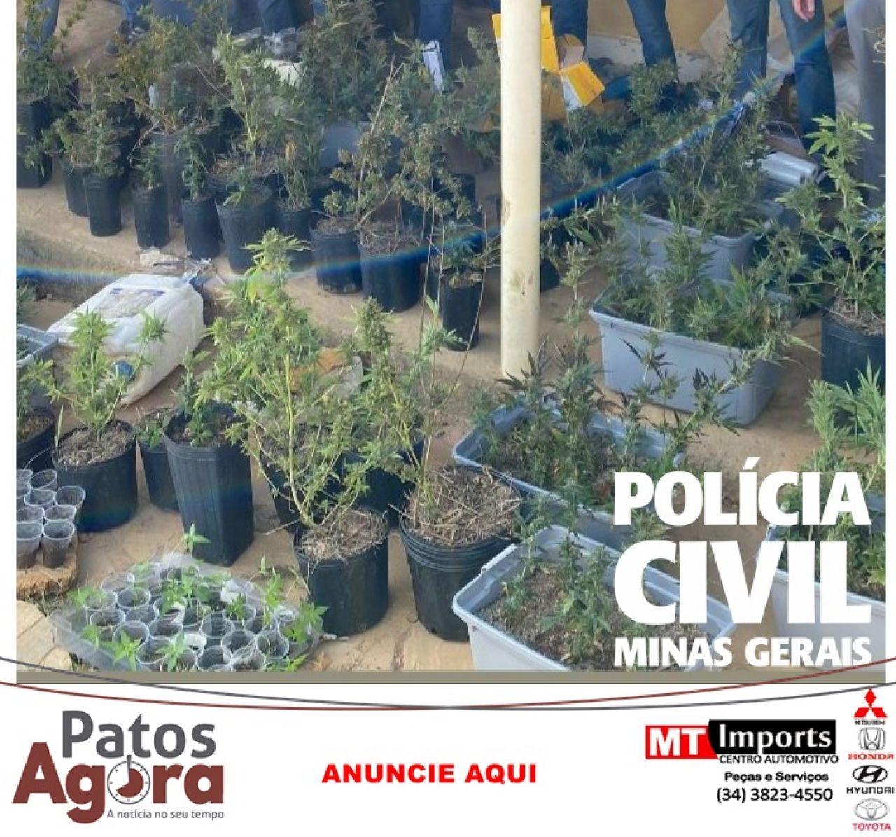 Plantação de cannabis é localizada pela PCMG após investigação