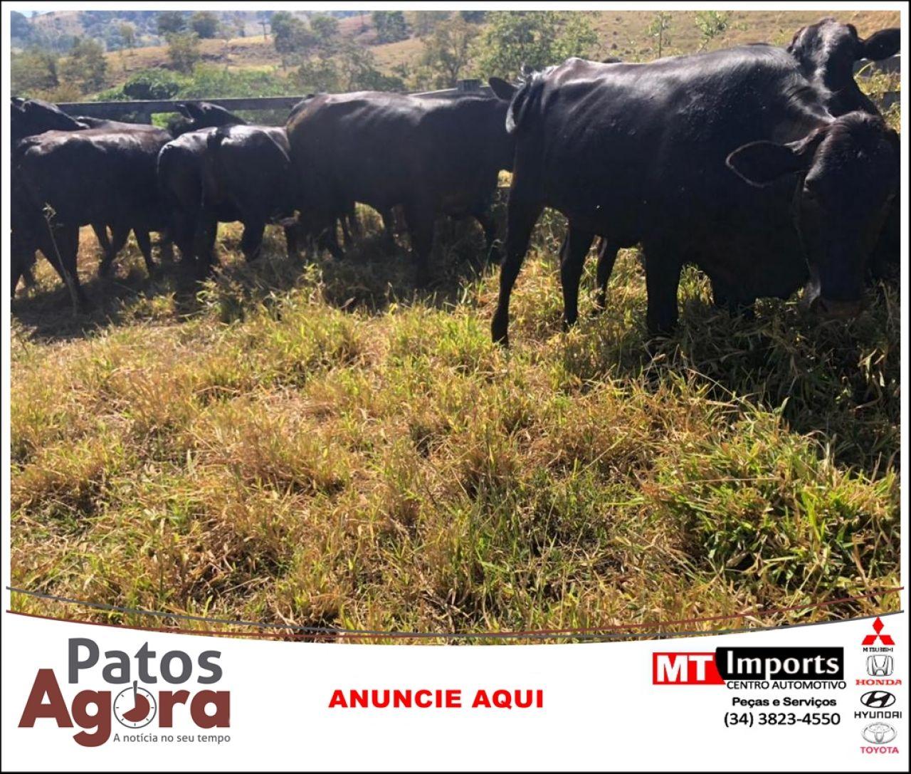 Polícia Civil recupera na zona rural de Lagoa Formosa gado furtado em Nova Ponte