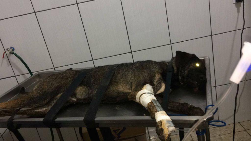 Vários cães abandonados foram envenenados em Serra do Salitre