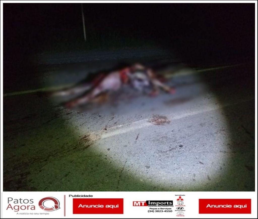 Ambulância de Presidente Olegário atropela e mata cavalo na BR-354