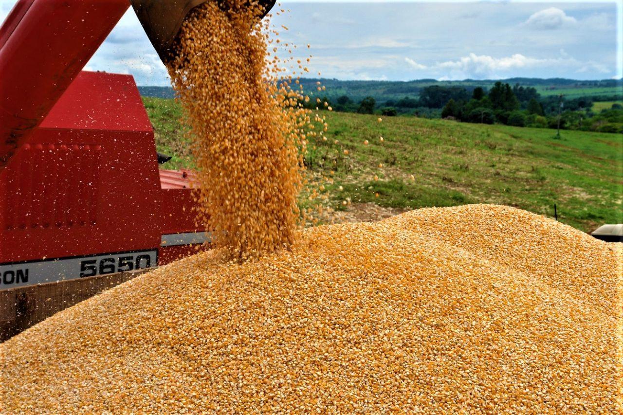 Chuvas irregulares podem afetar a segunda safra de milho
