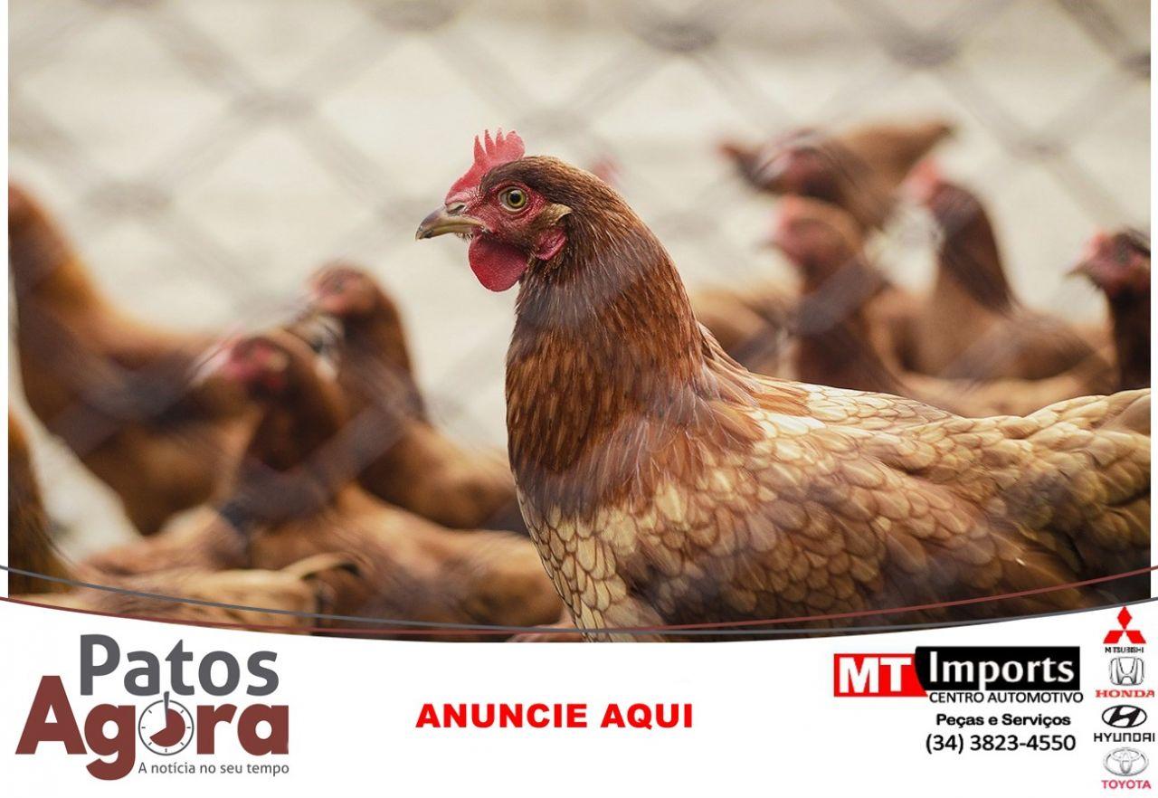 Minas movimenta 142,7 milhões de aves e ovos férteis em março