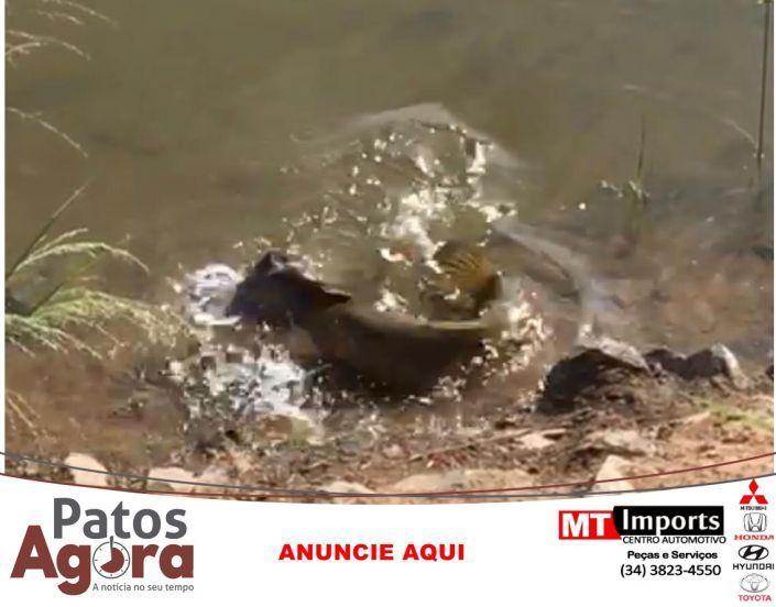 Enquanto isso na Orla da Lagoa- Peixe quase come rolinha