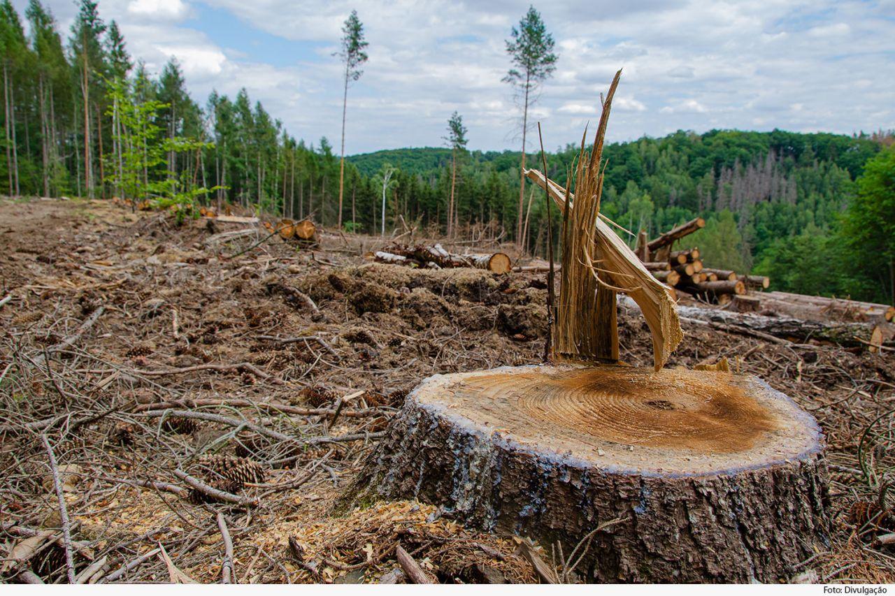 TJMG mantém paralisação de atividades em fazenda por dano ambiental