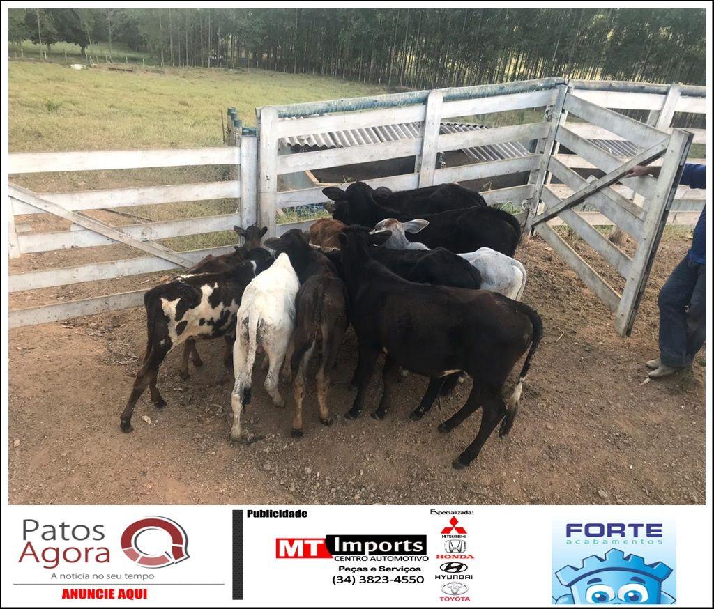 Patrulha Rural recupera cabeças de gado furtadas em Santana de Patos