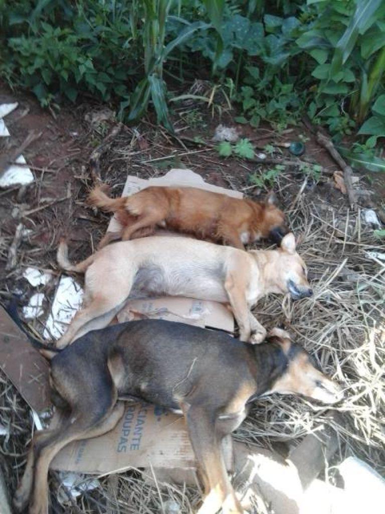 Cães de rua são encontrados mortos em Rio Paranaíba; PM suspeita de envenenamento