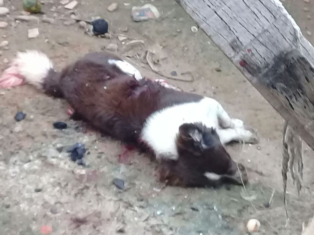 Homem embriagado  mata cachorro com golpes de faca e deixa familiares indignados